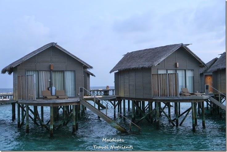 馬爾地夫 Centara渡假村 (56)