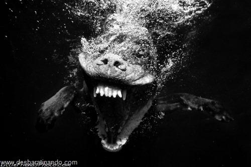 caes subaquaticos desbaratinando  (14)