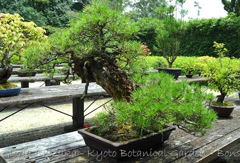Glória Ishizaka -   Kyoto Botanical Garden 2012 - 59