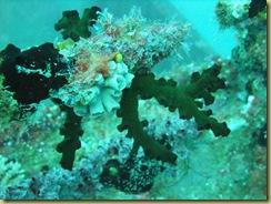 Soft Corals 4