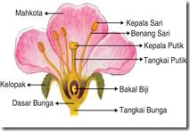 bagian bunga sempurna