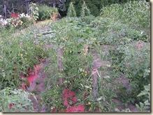Tomato stakes