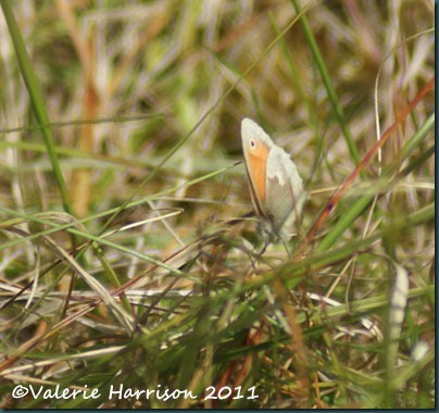 15-small-heath