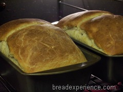 salt-rising-bread 032