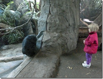 Vivi Looking at a Chimpanzee