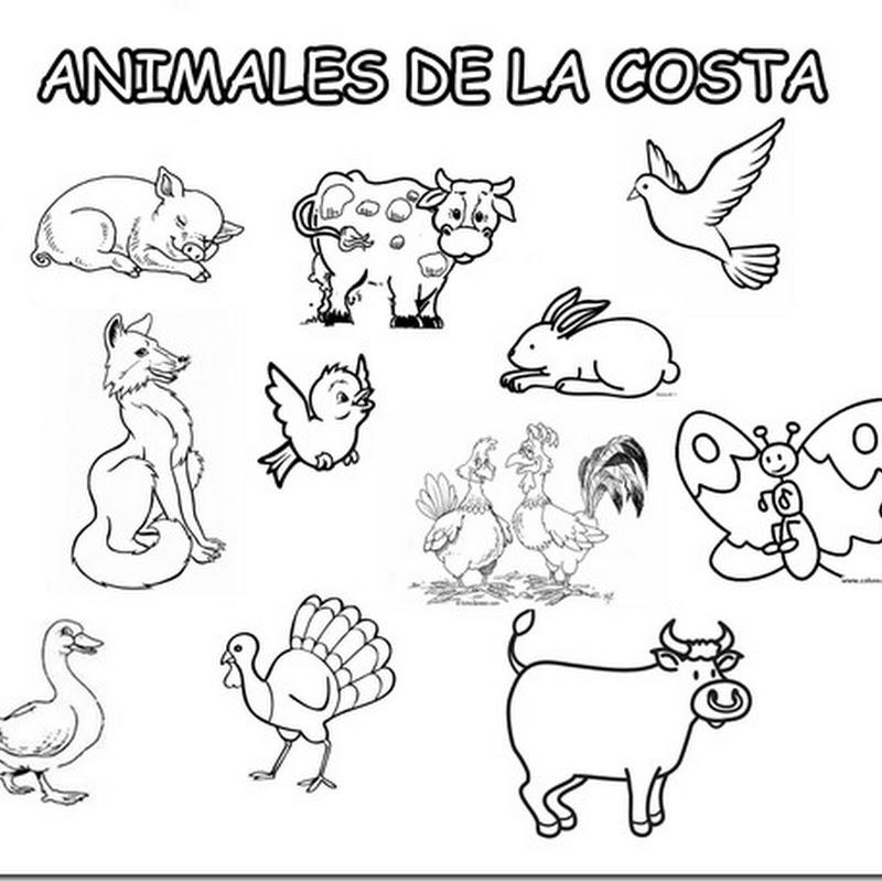 colorear animales peruanos