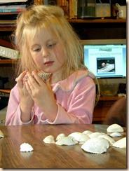 seashells2