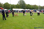 20100513-Bullmastiff-Clubmatch_30948.jpg