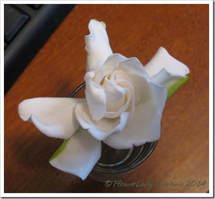 04-23-gardenia