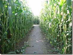Corn-Maze