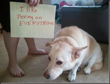 bad_dogs_publicly_shamed_640_32