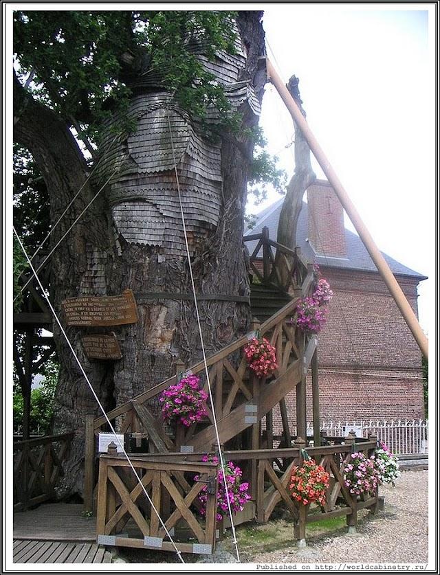 Церковь внутри дуба