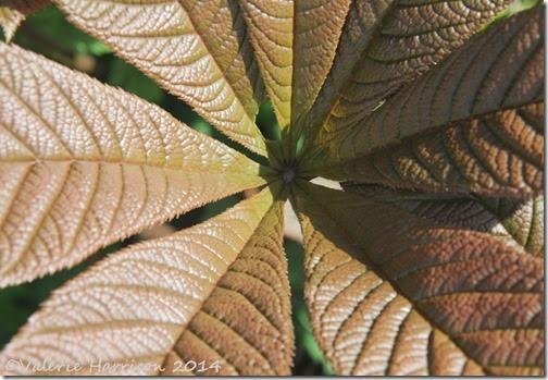 27-leaves