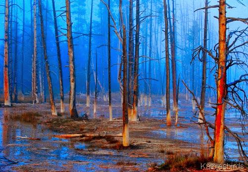 11-29-13 koda chrome forest-AFF8