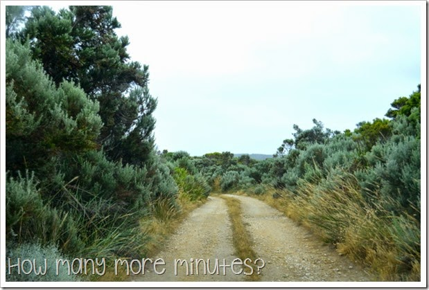 How Many More Minutes? ~ Cape Bridgewater, Victoria