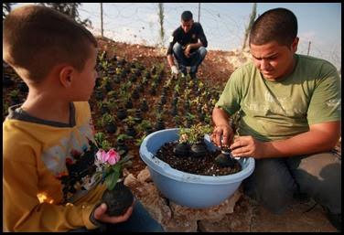 Dai lacrimogeni nascono fiori.. (3)