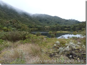 Vegetación de páramo, Laguna  Chinará, los Soches