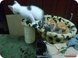 how to building cat tree -Assemble the posts and base 8