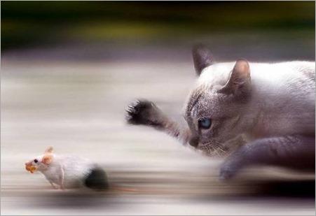animales-comer-comiendo-gato-raton
