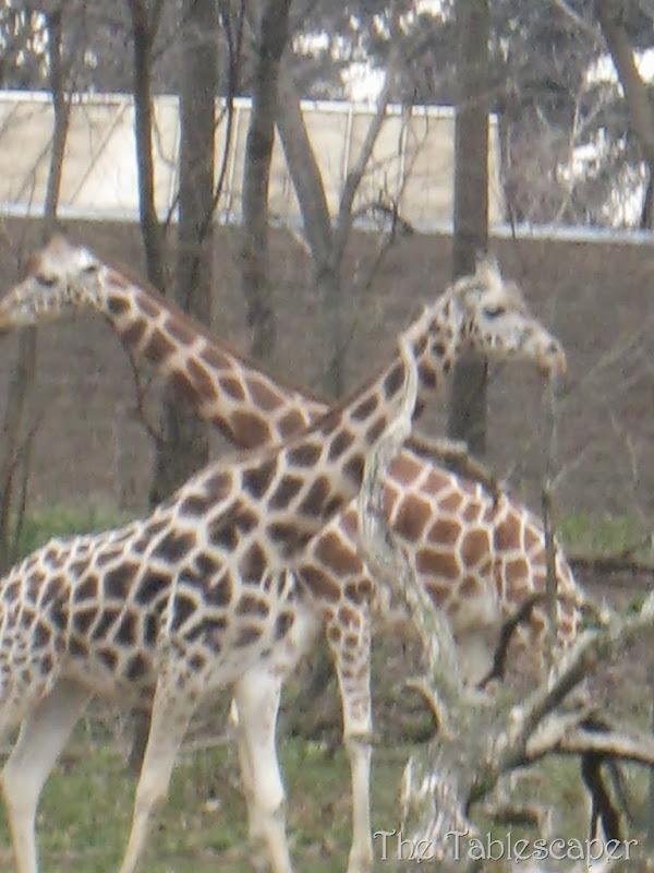 Bronx Zoo4