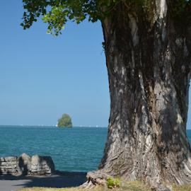 Villeneuve, Genfersee  by Viktorija Stanarčić - Nature Up Close Trees & Bushes ( sky, tree, waterscape, view, seascape, island )