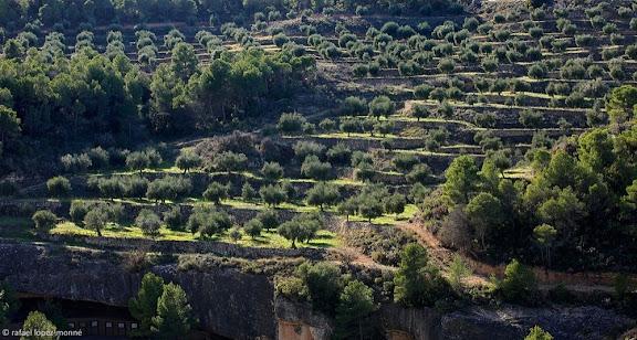 Oliveres, serra de la Penyalba,La Bisbal de Falset, Priorat, Tarragona
