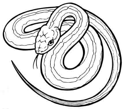 admin with Viper Coloring Pages Viper Drawings on Criancas Puzzles Para Imprimir Pintar E Montar besides Wimpel 2 moreover Index likewise 1128 besides 20080531101921.