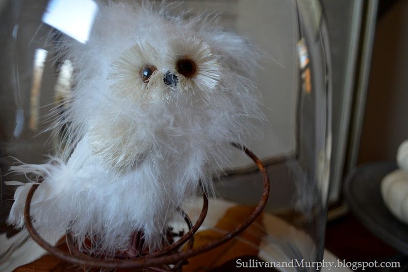 snowy owl under glass