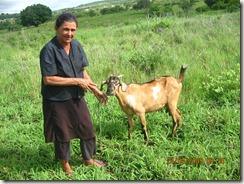 Dona Bela e Matriz Caprina que alimenta com leite seu neto-C