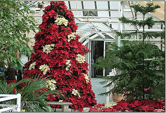 Poinsettia_Tree_Dec2_SM