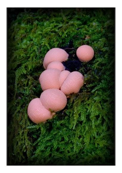 Mini Fungi 14