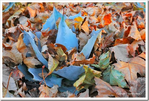 131122_home_leaves_16
