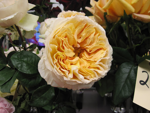The showcase of the 2011 rose collection at A Rose By Harvest displayed their roses almost at full-bloom.