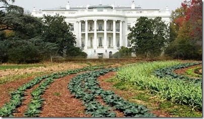 White-House-Vegetable-Garden