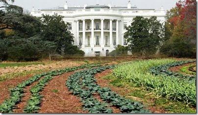 White-House-Vegetable-Garden