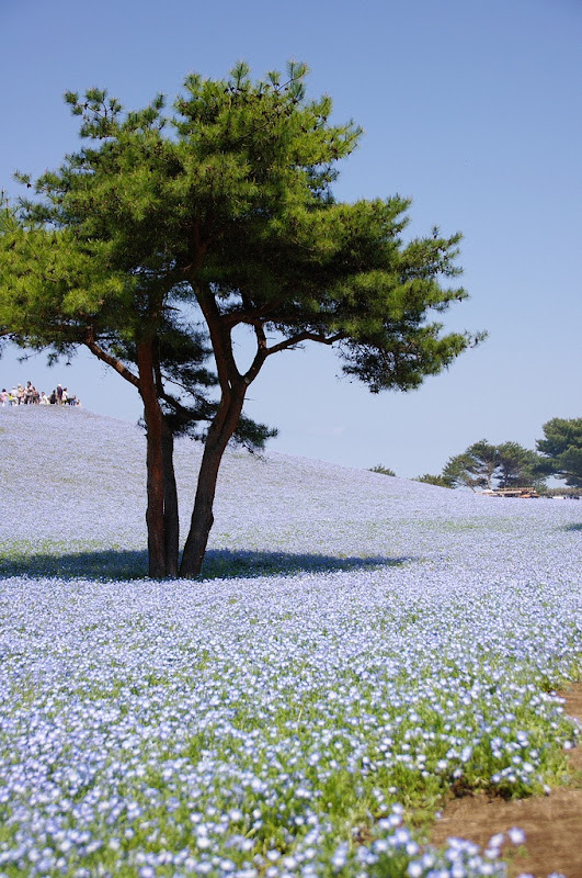 hitachi-seaside-park-10
