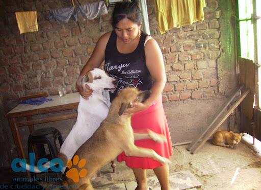 Casa de Milagros y sus perros y gatos.