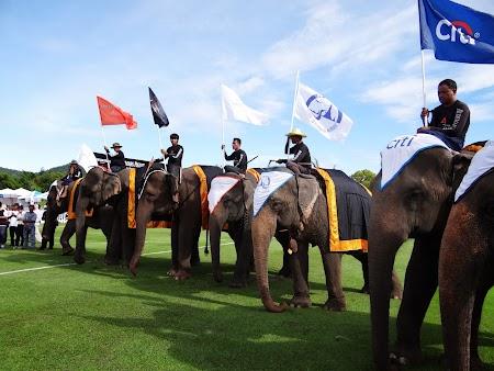 09. Elefanti Hua Hin.JPG