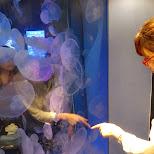 fumie looking at jelly fish in Shinagawa, Tokyo, Japan