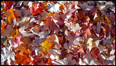 autumn leaves2