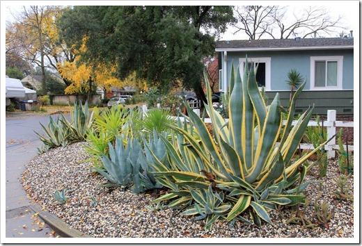 121202_Davis_succulent_garden19