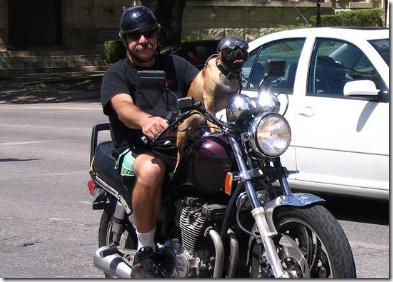 HOMBRE PERRO EN MOTO