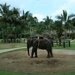 Бали. Сафари на слонах 5.jpg