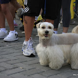 Pet Express Doggie Run 2012 Philippines. Jpg (241).JPG