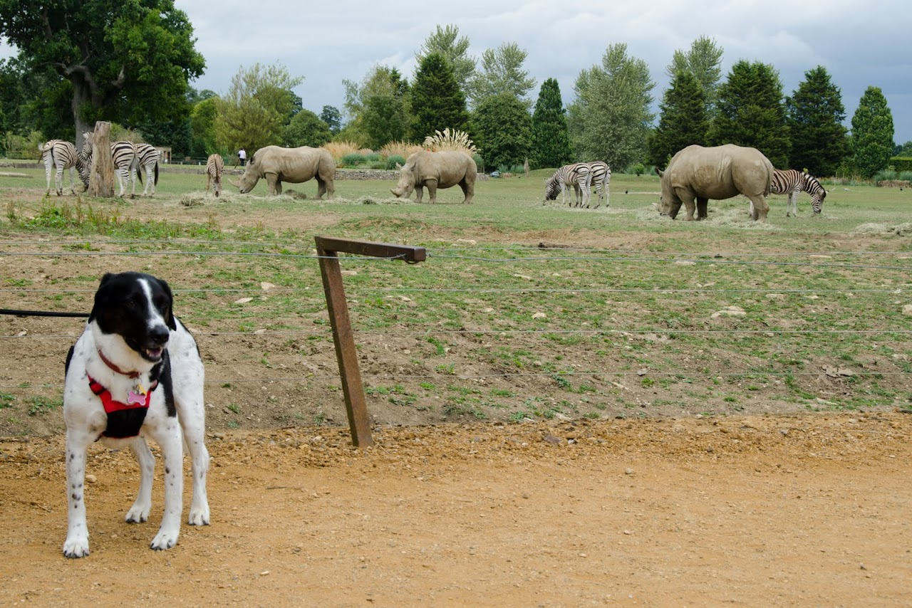 Abby and rhinos