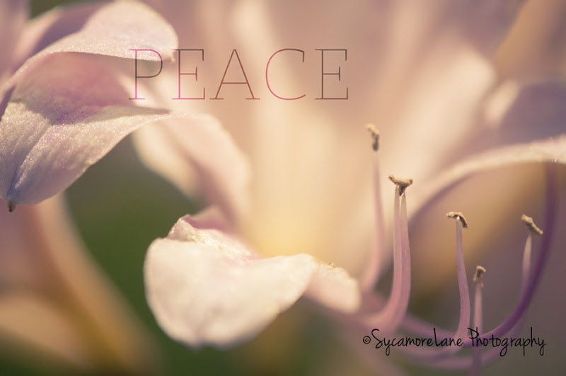 SycamoreLane Photography-Peace-web