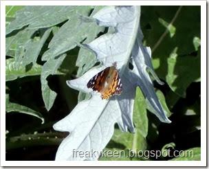 Hello Mr. Butterfly
