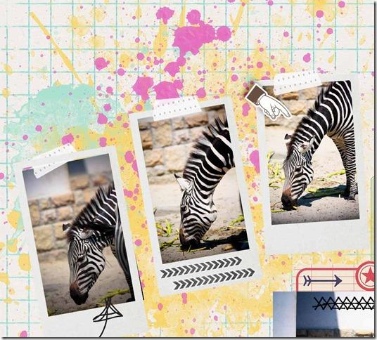 dettaglio foto zebra1