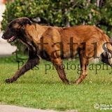 7.ª Exposição Canina Nacional do Estoril