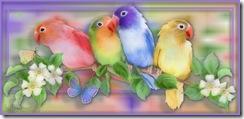 Pássaros (265)